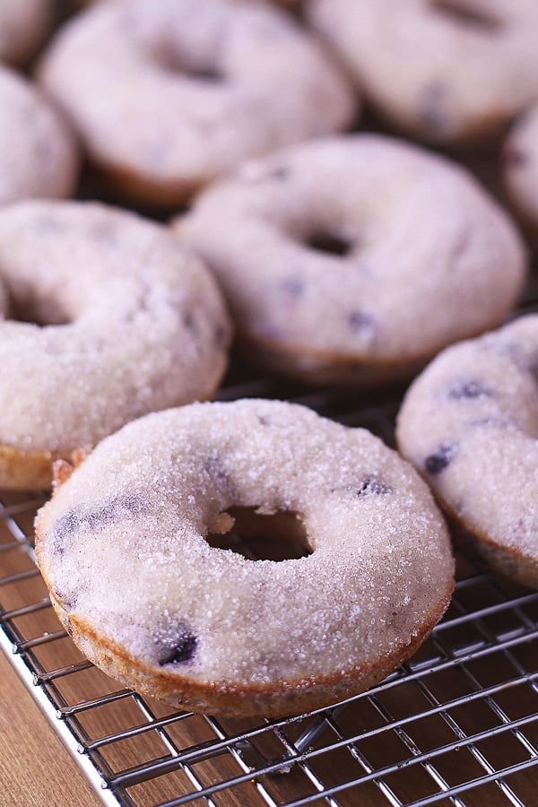 blueberry donut feat image
