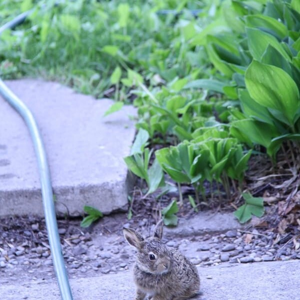 bunny sitting on the ground