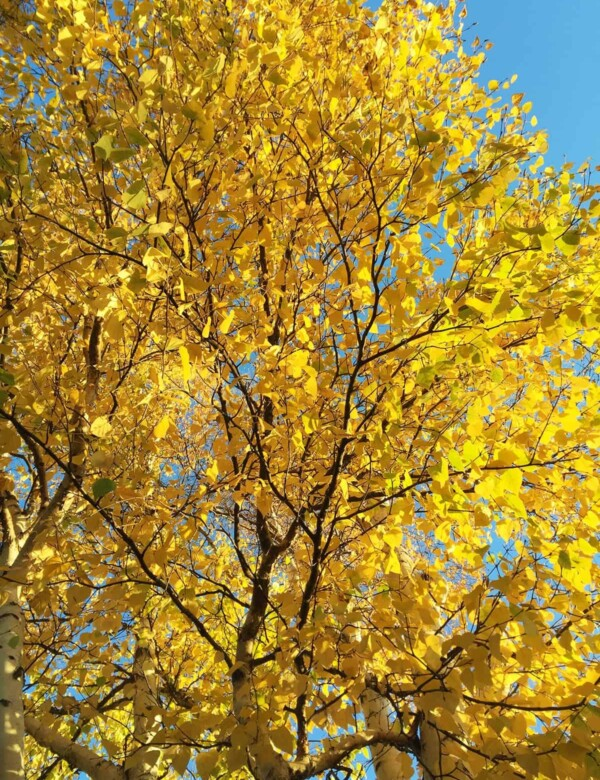 close up of a tree with yellow leaves