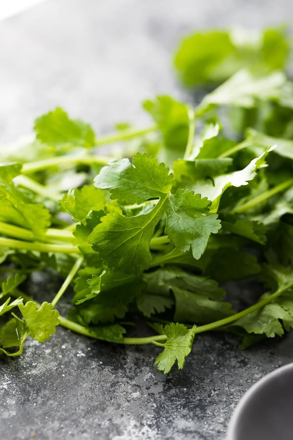 close up shot of a bunch of cilantro