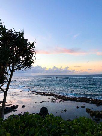 tree on a beach in maui